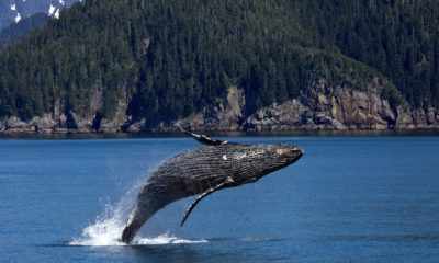 Crypto Whales are coming in fast on Tether, Hold 80% of Global Supply