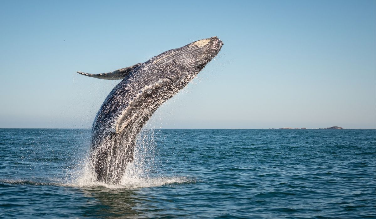 Whale Moves $1 Billion Worth of Bitcoins, Pays Only $600 as Transaction Fee